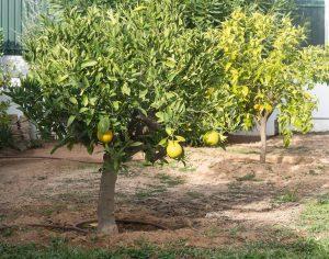 Oranger Carvoeiro