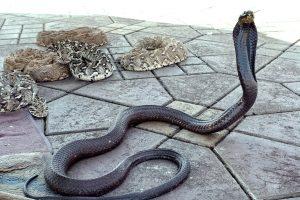 serpents-place-adjust